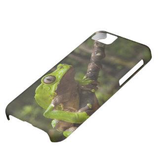 Giant leaf frog Phyllomedusa bicolor) iPhone 5C Case
