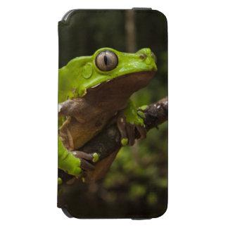 Giant leaf frog Phyllomedusa bicolor) iPhone 6/6s Wallet Case