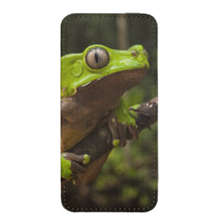 Giant leaf frog Phyllomedusa bicolor) iPhone SE/5/5s/5c Pouch