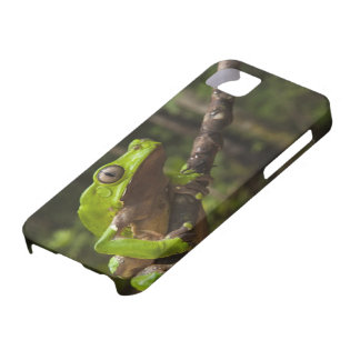 Giant leaf frog Phyllomedusa bicolor) iPhone SE/5/5s Case
