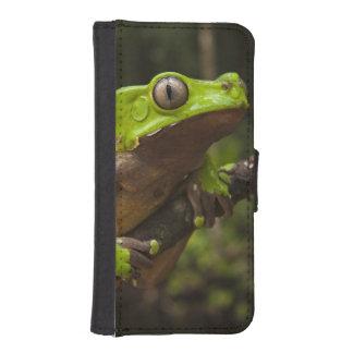 Giant leaf frog Phyllomedusa bicolor) iPhone SE/5/5s Wallet