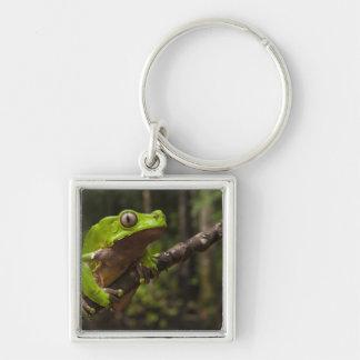 Giant leaf frog Phyllomedusa bicolor) Key Chain