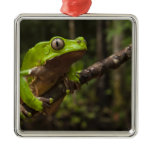 Giant leaf frog Phyllomedusa bicolor) Metal Ornament