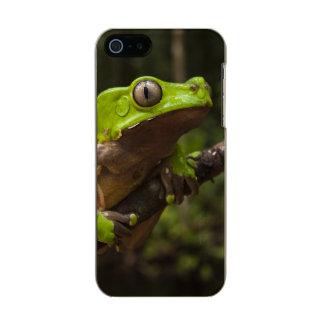 Giant leaf frog Phyllomedusa bicolor) Metallic Phone Case For iPhone SE/5/5s