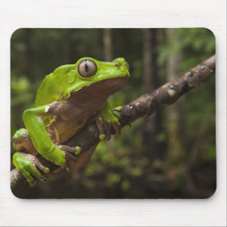Giant leaf frog Phyllomedusa bicolor) Mouse Pad