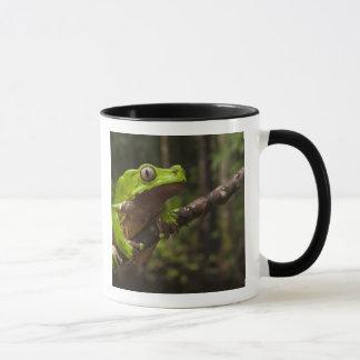 Giant leaf frog Phyllomedusa bicolor) Mug