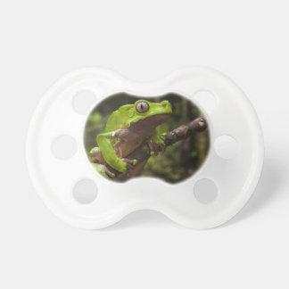 Giant leaf frog Phyllomedusa bicolor) Pacifier