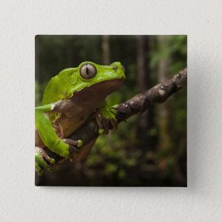 Giant leaf frog Phyllomedusa bicolor) Pinback Button