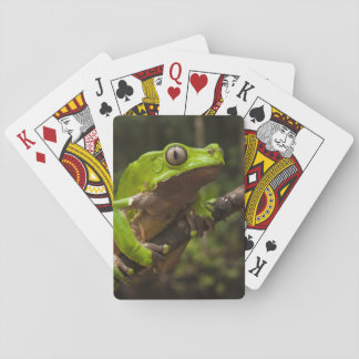 Giant leaf frog Phyllomedusa bicolor) Playing Cards