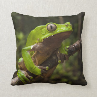Giant leaf frog Phyllomedusa bicolor) Throw Pillow