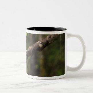 Giant leaf frog Phyllomedusa bicolor) Two-Tone Coffee Mug
