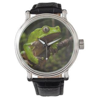Giant leaf frog Phyllomedusa bicolor) Wrist Watch