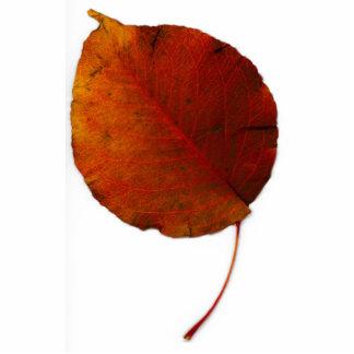 Giant Leaf IV Photo Cut Out