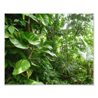 Giant Leaves Jungle View Plant Photograph