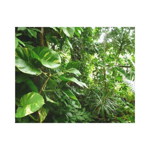 Giant Leaves Jungle View Plant Photograph Canvas Print