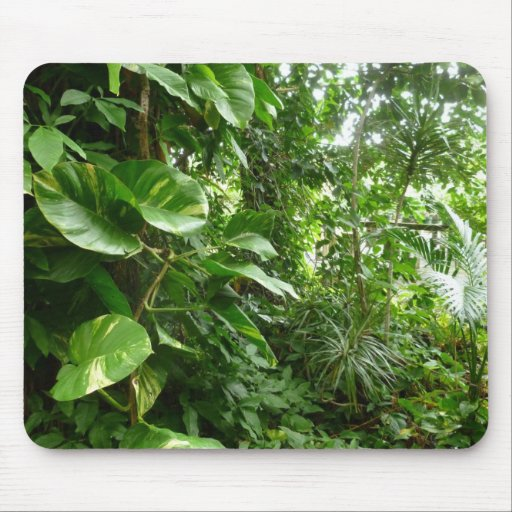 Giant Leaves Jungle View Plant Photograph Mouse Pad