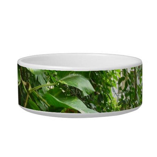 Giant Leaves Jungle View Plant Photograph Cat Food Bowls