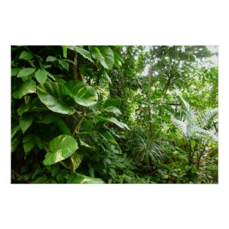 Giant Leaves Jungle View Plant Photograph Poster