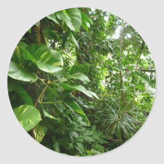 Giant Leaves Jungle View Plant Photograph Stickers