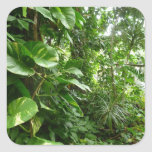 Giant Leaves Jungle View Plant Photograph Sticker