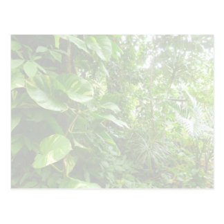 Giant Leaves Wash Out Jungle View Post Cards