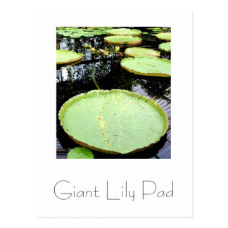 Giant Lily Pad Postcard Design