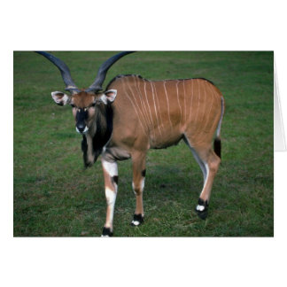 Giant/Lord Derby's Eland-young bull Greeting Cards