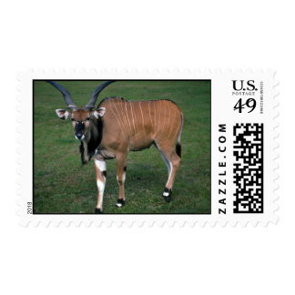 Giant/Lord Derby's Eland-young bull Postage Stamp