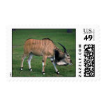 Giant/Lord Derby's Eland-young bull Stamp