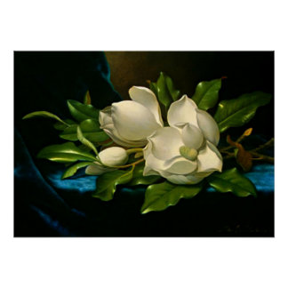 Giant Magnolia on a Blue Velvet Cloth Poster