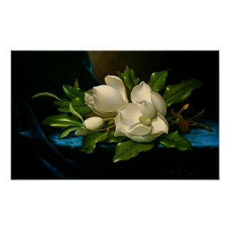 Giant Magnolias on a Blue Velvet Cloth Poster