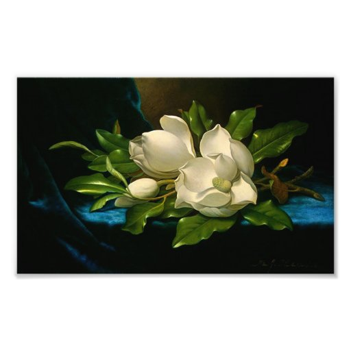 Giant Magnolias on a Blue Velvet Cloth Poster Photograph