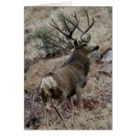 Giant mule deer buck card
