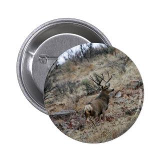 Giant mule deer buck pinback button