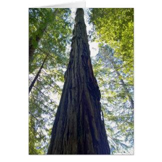 Giant Neverending Redwood Tree Card
