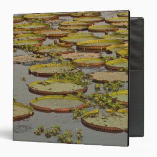 Giant or Victoria Lilies Victoria amazonica, 3 Ring Binders