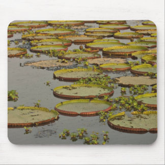 Giant or Victoria Lilies Victoria amazonica, Mouse Pad