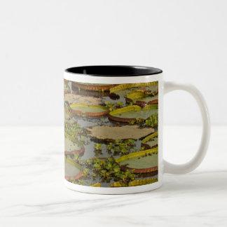 Giant or Victoria Lilies Victoria amazonica, Two-Tone Coffee Mug