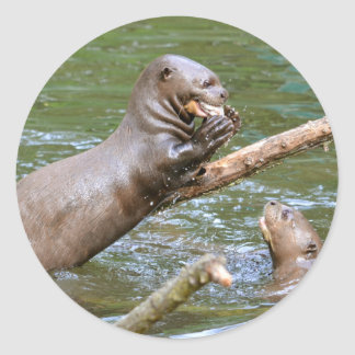 Giant otter eating a fish classic round sticker