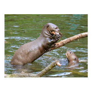 Giant otter eating a fish postcard