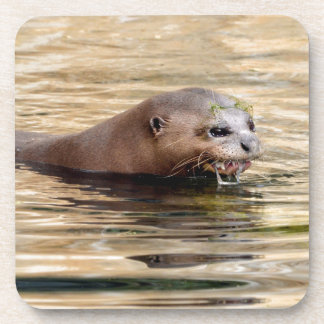 Giant otter swimming in water drink coaster