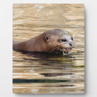 Giant otter swimming in water plaque