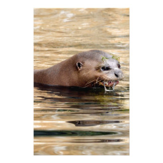 Giant otter swimming in water stationery