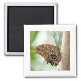 Giant Owl Butterfly Magnet