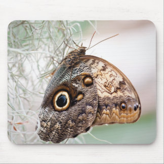 Giant Owl Butterfly Mouse Pad