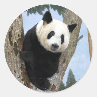 giant-panda10x10 sticker