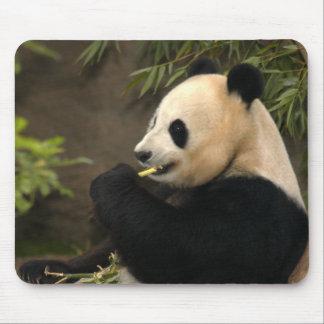 giant-panda2-10x10 alfombrilla de raton