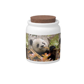 giant-panda7-12x9 candy dishes