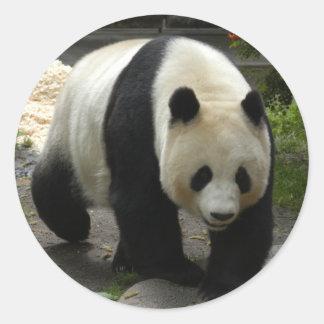 giant-panda-10x10 stickers