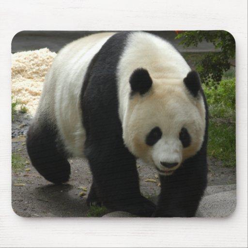 giant-panda-10x10 tapete de ratones